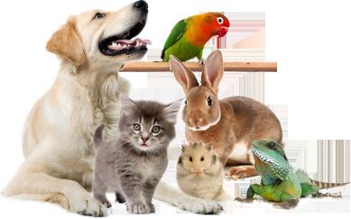 ветеринарная клиника бердск друг цены